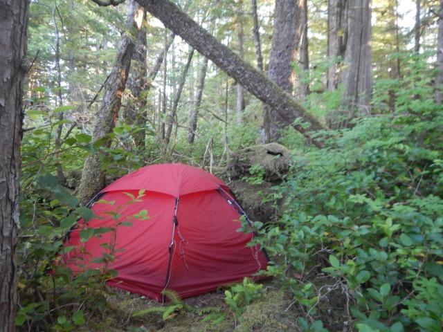 Teltplass i skogen